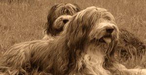 dogs-club